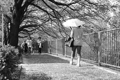 町田樹 画像15