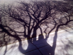 Legacy (kevin dooley) Tags: street shadow arizona portrait zine tree mobile self community phone review journal az cel business management research sp motorola similar fractal longevity chandler academy legacy academic publication kd citation publishorperish zn5