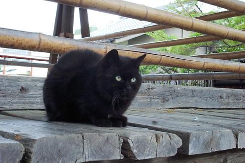 Today's Cat@20090416