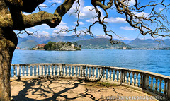 Stresa - view on Isola Bella (Palace Borromeo) (FrancescoMalpensi) Tags: lake tree lago ile piemonte bella maggiore albero palazzo lagomaggiore isola stresa borromeo 5photosaday borromei