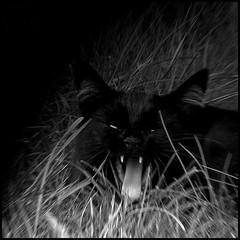 animals (2) ([zen52]) Tags: viewlarge soe bsquare bwgallery aplusphoto bwartaward blackartwhite musicsbest