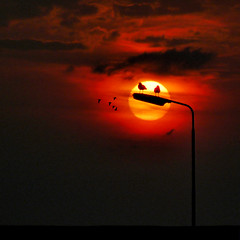 Two's company (Bn) Tags: sunset seagulls haven lamppost 500faves texel threesacrowd birdisland topf400 topf500 twoscompany oudeschild 400faves whereset