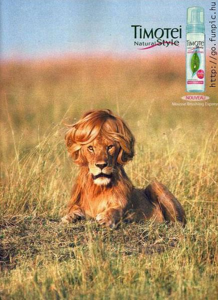 bouffant lion.jpg