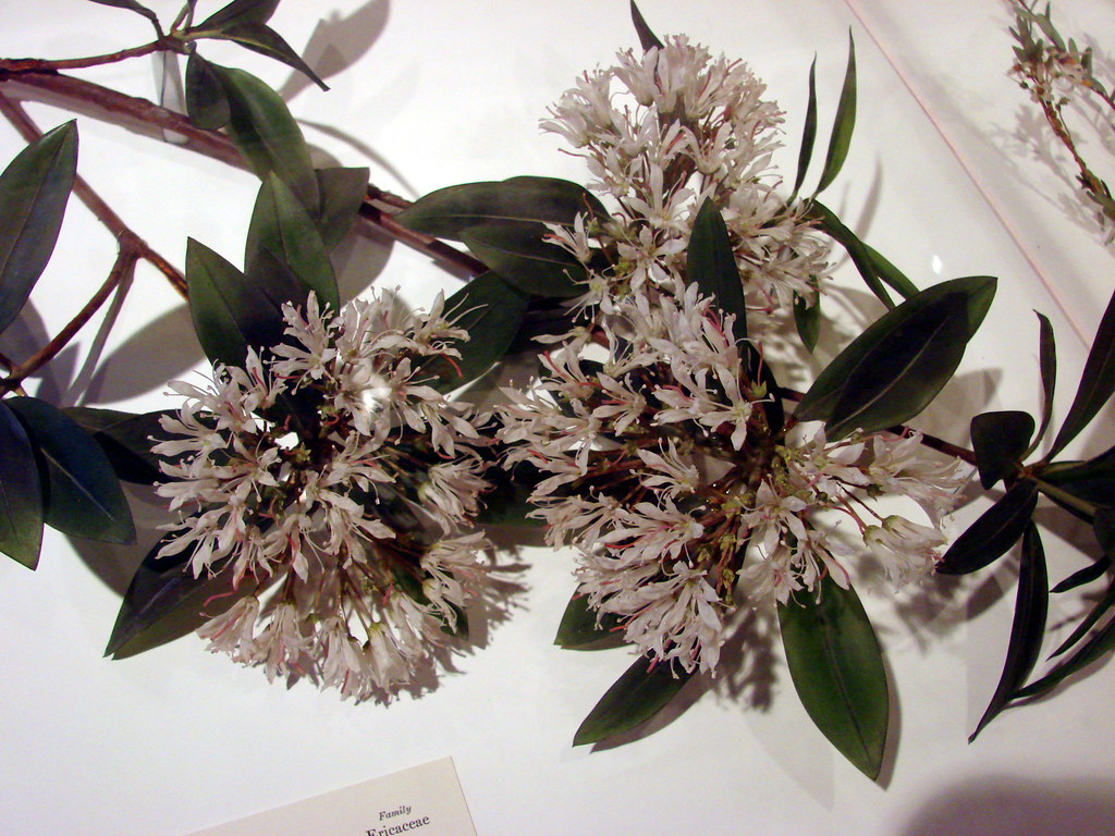 Image result for harvard glass flowers