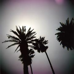palms flare