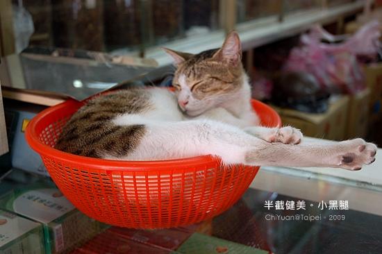 Cat。大紅籃子。踢腿貓04