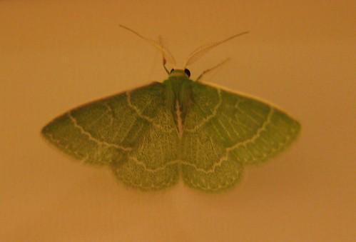 05-20 moth