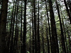forestali (miglio) Tags: shadow tree verde foglie albero luce foresta platinumphoto