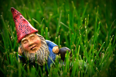 120/365  Field of Dreams or Travelocity Gnome on Vacation...