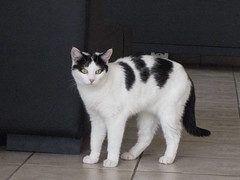 my little tiger (francesca.clemente) Tags: leuven cat francesca felini gatto viaggi gatti smelly cagliari clemente francescaclemente clementefrancesca