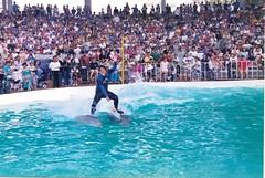 Bobby Dolphin Show (ABC Dolphin Trainer Academy) Tags: ride dolphin behavior trainer trainingsession positivereinforcementtraining entrenamientorefuerzopositiva entrenadordedelfines publicshowstraining delfinentrenadorroman