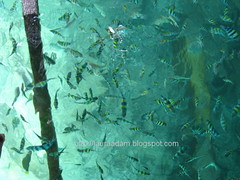 view of fishes from jetty