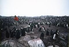 880202 Adelie Penguins (rona.h) Tags: cloudnine palmerstation ronah adeliepenguins anversisland antardtica vancouver27 bowman57