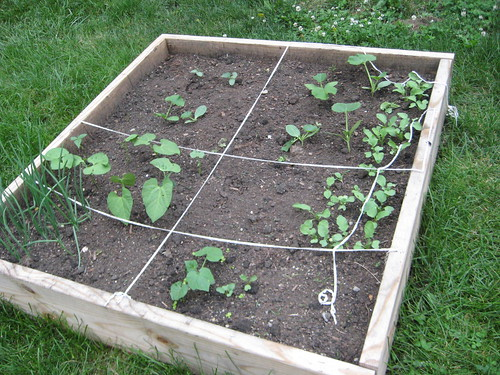 second raised bed (by lauraloops)