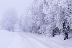 Remember the Dark (diesmali) Tags: road trees winter mist snow sweden dusk sverige linkping stergtland canon50mmf14usm canoneos7d