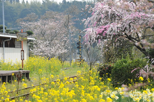 Fusamoto station in many flowers