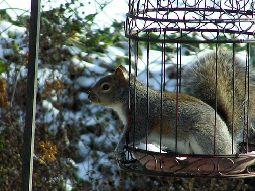 Skippy in Bird Feeder