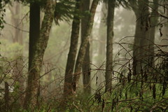 In the woods (Nina Edelweiss) Tags: mist tree nature brasil forest canon natureza natur wald floresta rvore baum mato riograndedosul gramado cerrao