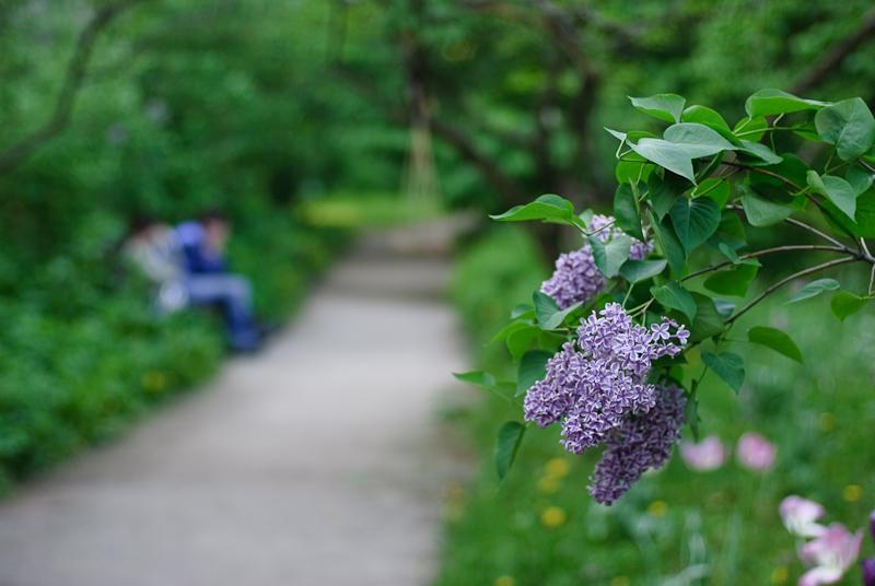 Spring in Botanic garden #15