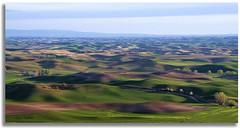 This land is your land... (walla2chick) Tags: road sky usa clouds washington shadows hills wa palouse palousehills steptoebutte paintingvenice topazadjust 3780tpzaven