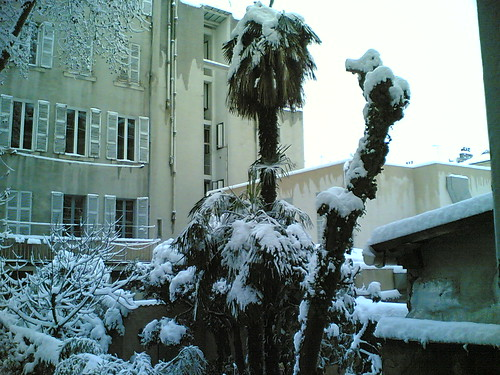 marseille garden under the snow 3