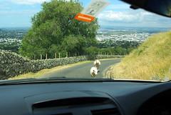 Sheep on One Tree Hill (-Cobaltblue-) Tags: newzealand sheep pentax auckland onetreehill maungakiekie k200d