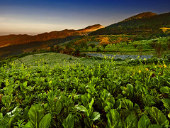 ~ The Vegetable Field ~ (Peem (pattpoom)) Tags: field landscape vegetable explore  nikkor1224mmf4gedifafs