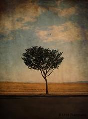 Endlessly (redrocker_9) Tags: sky tree texture polaroid joelynnturner ilovethistree i733 dontknowwhereitcamefrom needsbirds veryoldtexture