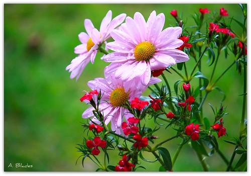 Just as a flower leans toward the sun, we lean towards love