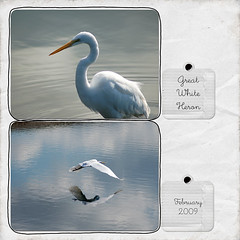 Great White Herons (Sunny Days) Tags: white heron digital scrapbook layout load