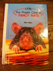 THE PROPER CARE OF FANCY RATS
