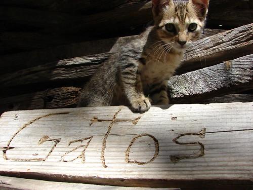 Gatos por brunof89.