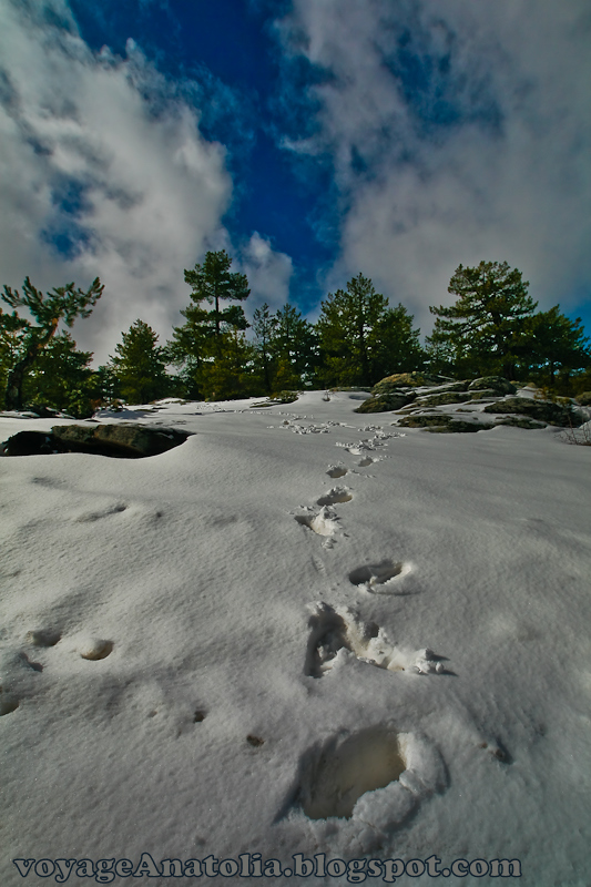 Footsteps at Snow