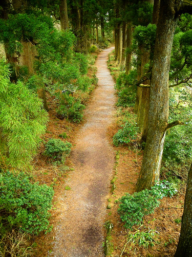 Old Cedar trail on the way to Edo,