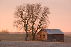 Trees & Shed (Tom Yoemans) Tags: week14 theunforgettablepictures proudshopper rwpc 5212of2009