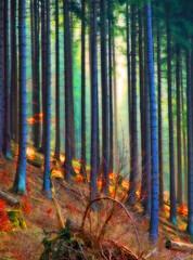 Moment of joy (haikus*) Tags: trees forest colours soe enchanted orton goldenheartaward