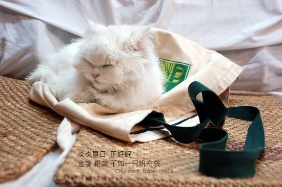 [叮叮]沉睡。布袋貓01
