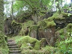 Steps in Aros Park 2