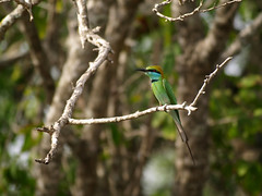 Bird On A Twig - Yala National Park