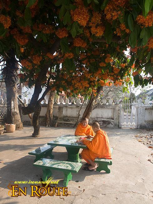 Luang Prabang Wat Sensoukarahm Studying Monks