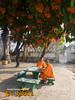 Luang Prabang Studying Monks at Wat Sensoukarahm