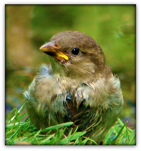 """""""Mein Vogel""""!"""