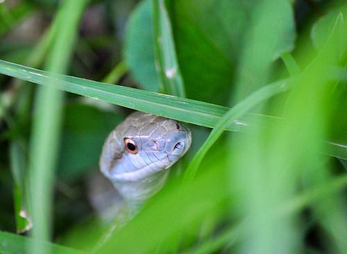 Arco iris y serpientes class=