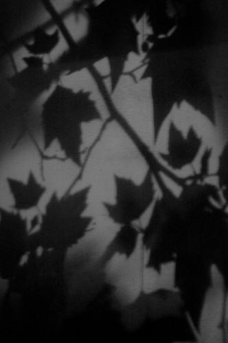 leaves-0118