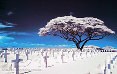Life and death (Kuya D) Tags: blue tree cemetery ir nikon philippines infrared acacia pinoykodakero pkchallenge