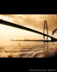 Birds Circuit at Nagoya Harbor Japan....HDR Sepia (♫ Photography Janaina Oshiro ♫) Tags: bridge water rio água japan sepia digital river ponte supershot abigfave nikond90 goldstaraward sognidreams oneofmypics
