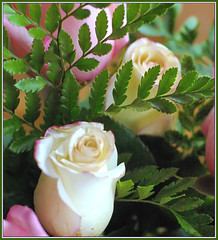 Yellow, Pink and Green (Cliff Michaels) Tags: pink flowers light roses green colors leaves yellow photoshop d50 petals nikon blossoms capturenx