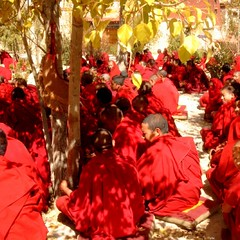 Tibet monks discussing (Ginas Pics) Tags: travel red people tree fall religious interestingness interesting god robe religion monk buddhism tibet holy explore monastery sacred gods spiritual fp extraordinary dalailama sacredsite exceptional monkrobe travelphotography gelugpa explored holypics   tibet sacredreligion