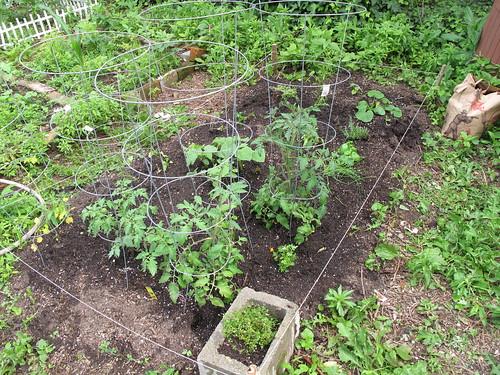 garden plot, angle view