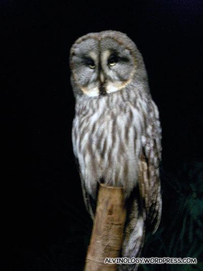 Majestic looking giant owl